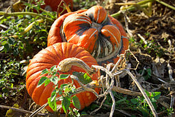 Photo by Nicole Gordine, courtesy of Wikimedia Commons