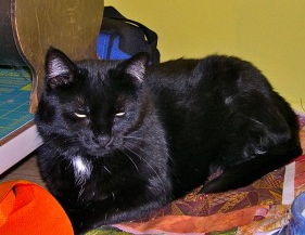 black cat (krl)