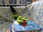 groucho-the-snake-2